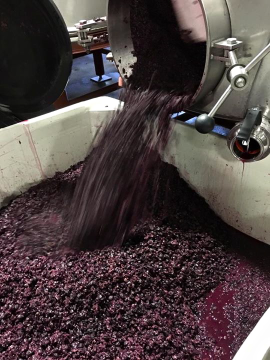 #2015Harvest, Saxon Brown Wines -- www.saxonbrown.com